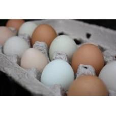 Huevos de campo (por docena)