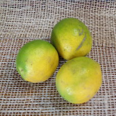 Limón Meyer orgánico